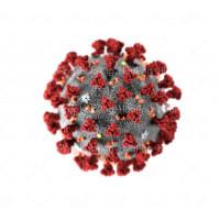 Immunity Kit Ayurveda